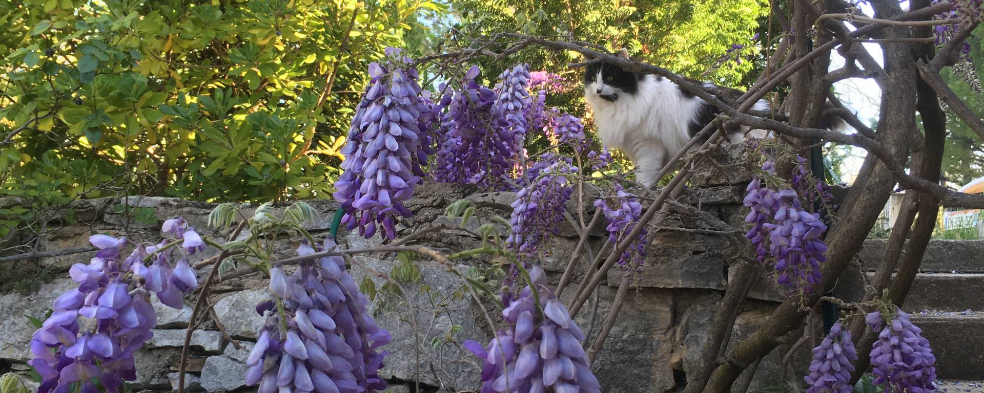 lolcats chats luberon animaux nature
