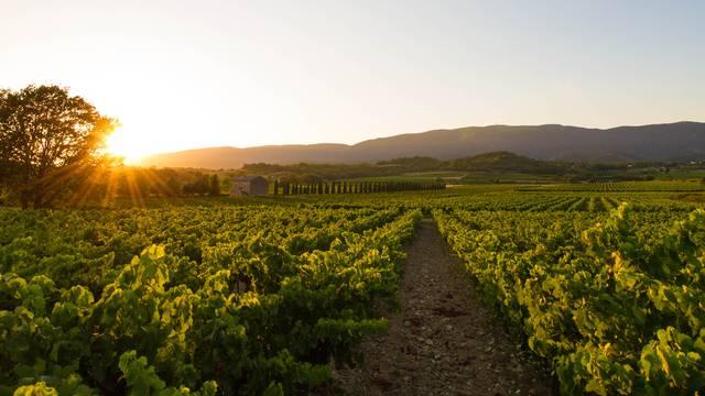 Sunset vignerons 2021