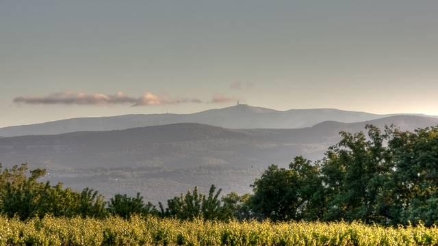 Montagne | Vignes | Vue | Mont Ventoux