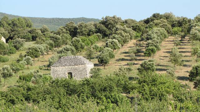 Bories | Luberon | Nature préservé | Parc naturel Régional du Luberon | Champs d'olivier | Maison en pierres sèches