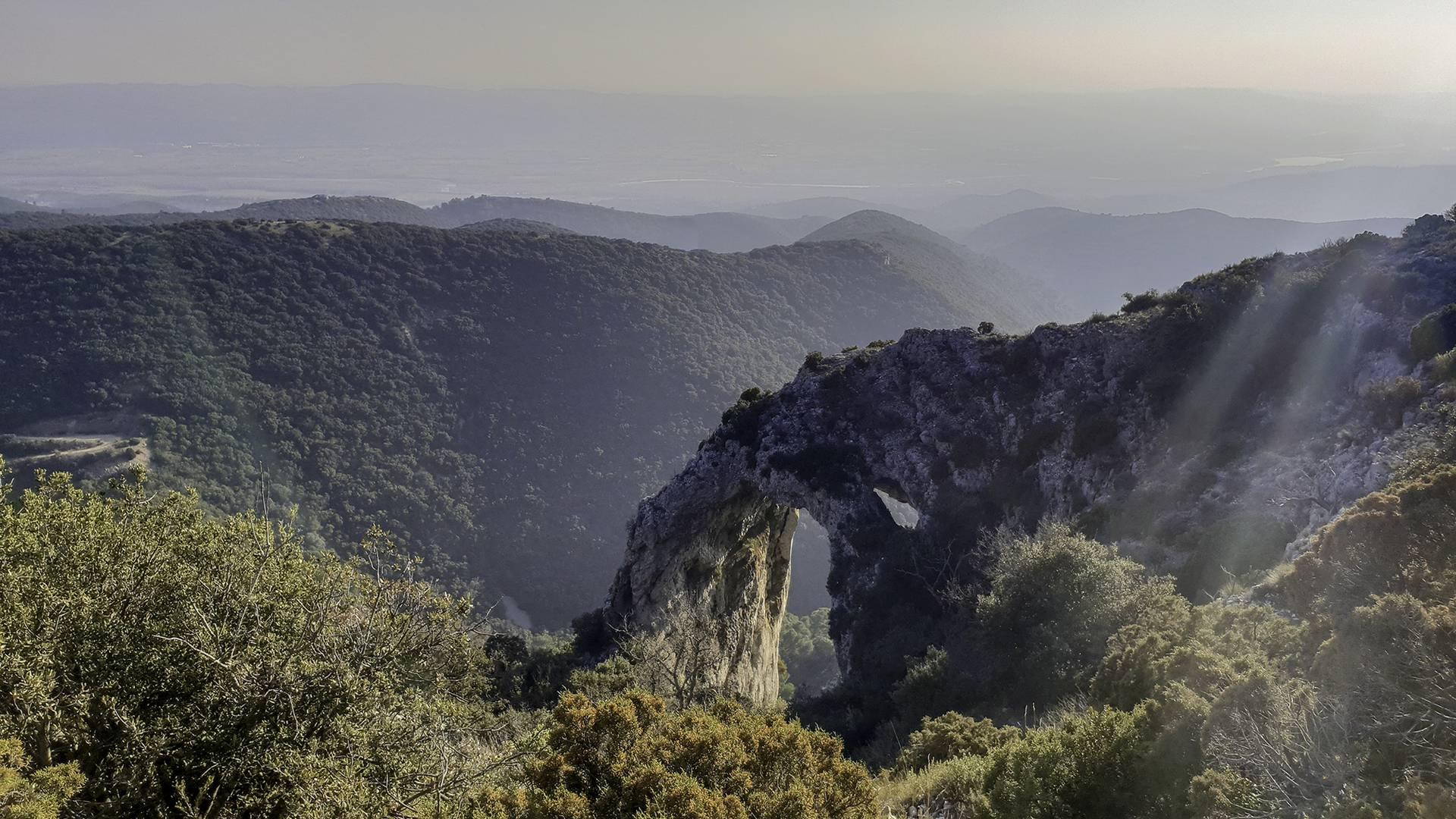 Forêt des Cèdres | Sentier du Portalas | Nature