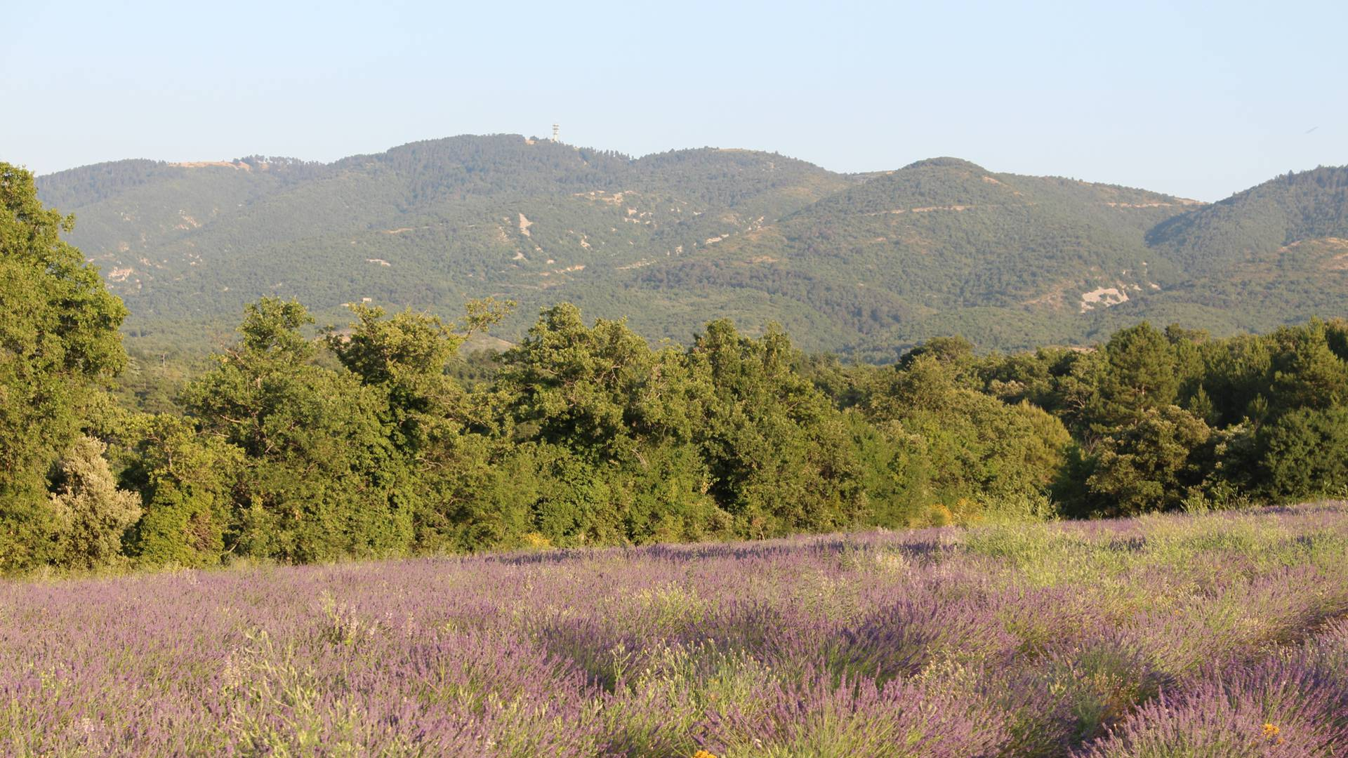 Plateau des Claparèdes | Randonnée dans le Luberon