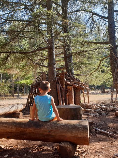 Forêt de cèdres