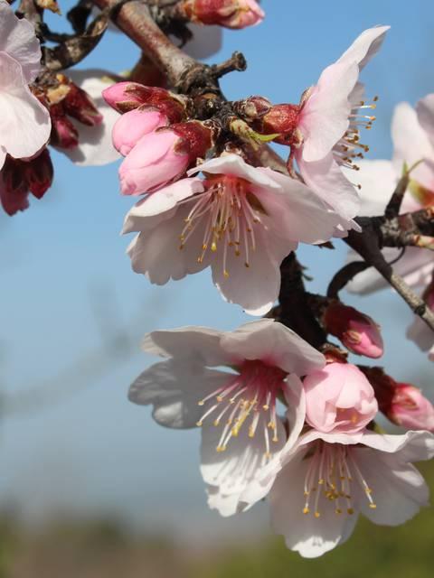 La nature au printemps en Luberon