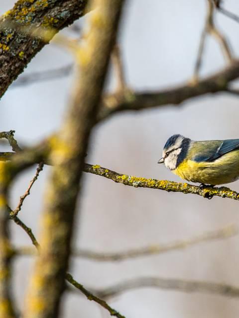 orbisterre oiseaux ornithologie observation nature ocres roussillon luberon provence couleurs rustrel