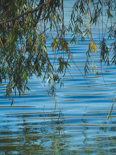 Plan d'eau   Baignade
