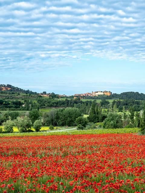 Roussillon| Villages | Coquelicots