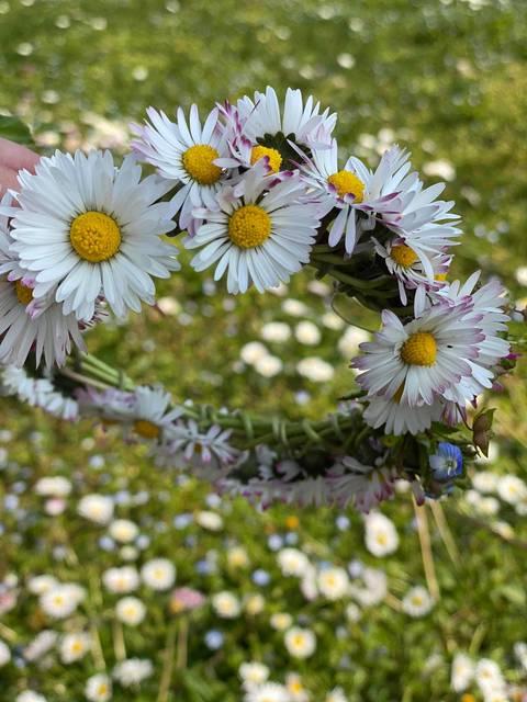 couronne fleurs marguerite luberon provence pâquerette printemps