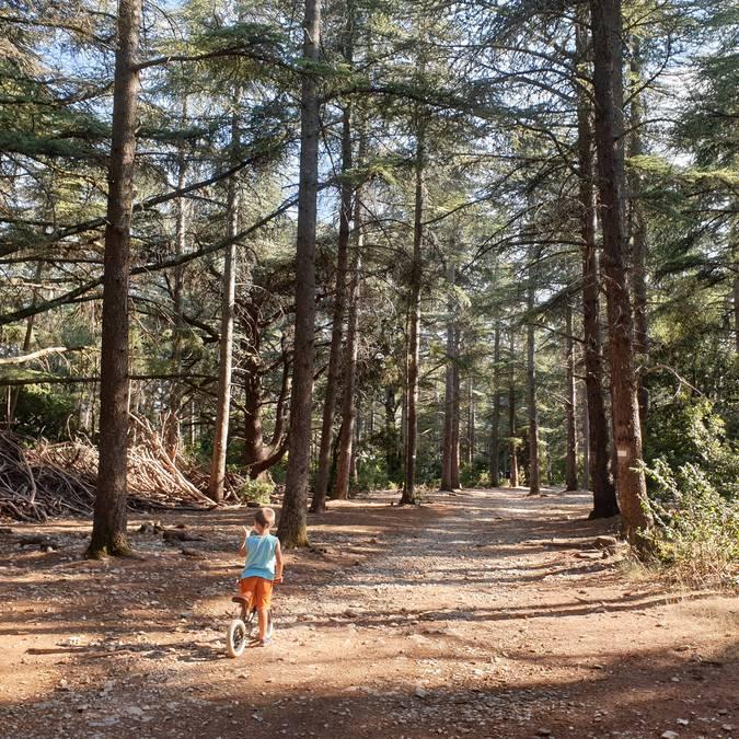 Forêt des Cèdres | Sentier du Portalas | Nature | Arbre | Bois | Cabane