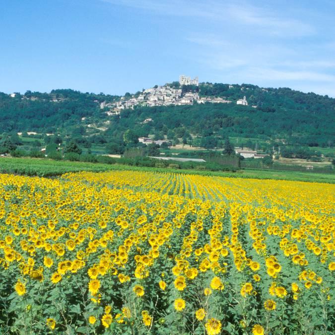 Lacoste   Patrimoine   Village perché   Tournesols