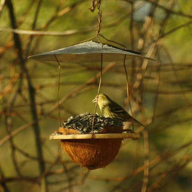 nichoir observer oiseau confinement pays apt luberon