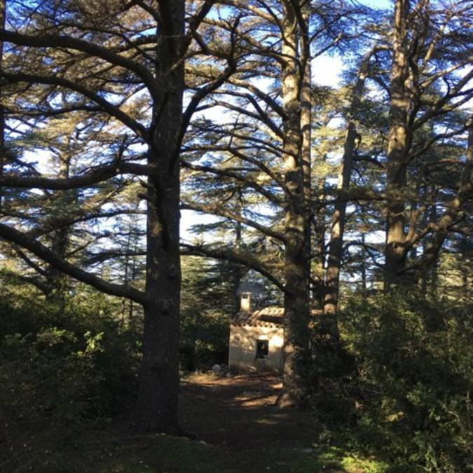 Bastidon du Pradon | Forêt des Cèdres | Cèdres de l'Atlas l Refuge