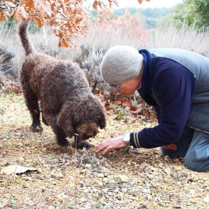 Cavage de Truffe en Luberon