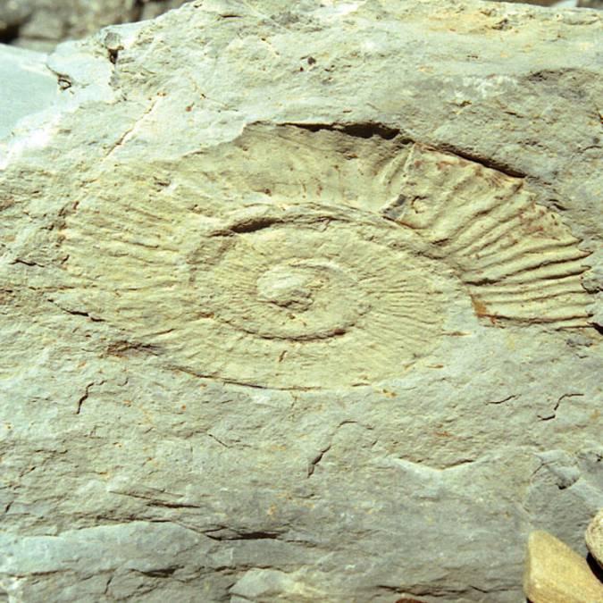 Musée de la géologie - Fossiles