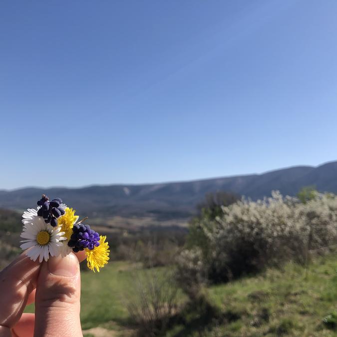 pâquerette fleurs printemps luberon provence