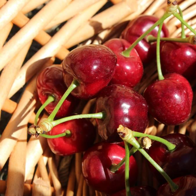 Cerise du Luberon | Feuille |Panier