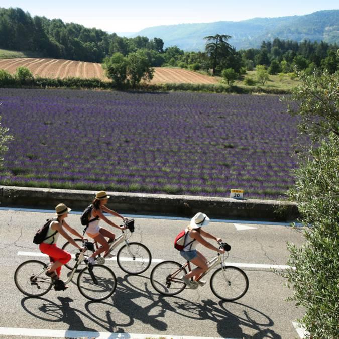 Champs de lavande du Luberon| Femme | Vélo