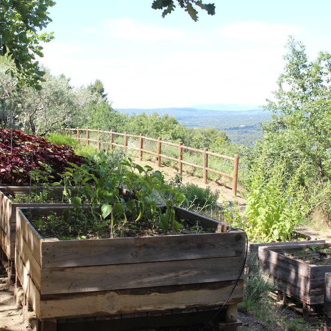 Jardin botanique | Plantes aromatiques