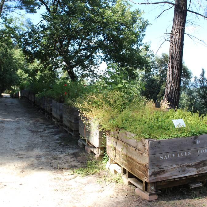 Jardin botanique | Plantes médicinales
