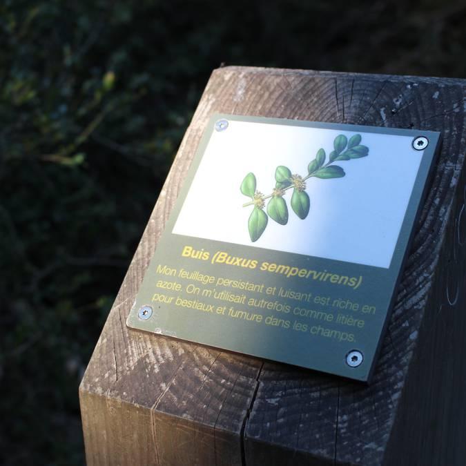 Borne information | Buis | Forêt des Cèdres