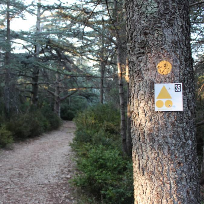 Itinéraire VTT | Mountain bike l Luberon | Forêt des Cèdres