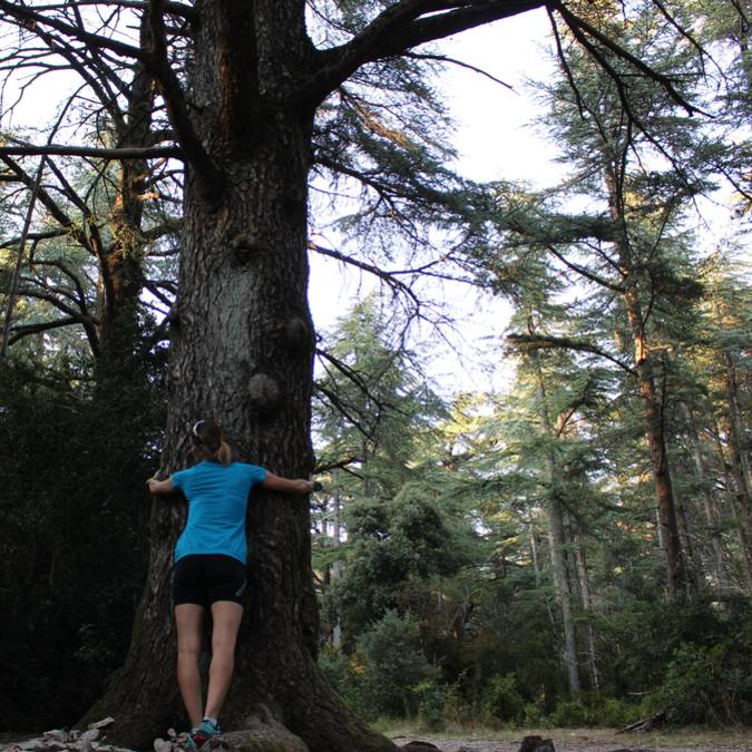 Arbre | Sylvothérapie | Forêt des Cèdres