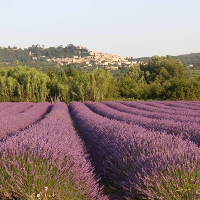 Champs de Lavande |Bonnieux | Village perché | Lavande | Luberon