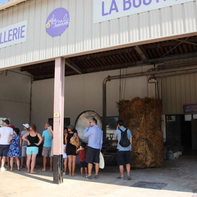 Distillerie de lavande | Lavande | Visite groupe | Luberon