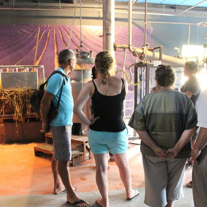 Distillerie de lavande | Lavande | Visite groupe | Luberon | Distillation