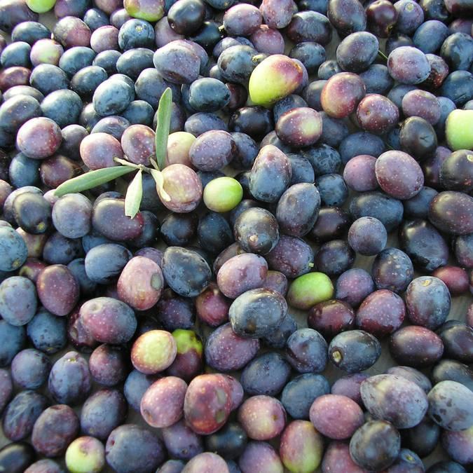 Marché provençal du Luberon | Olives | Variétés | Étal