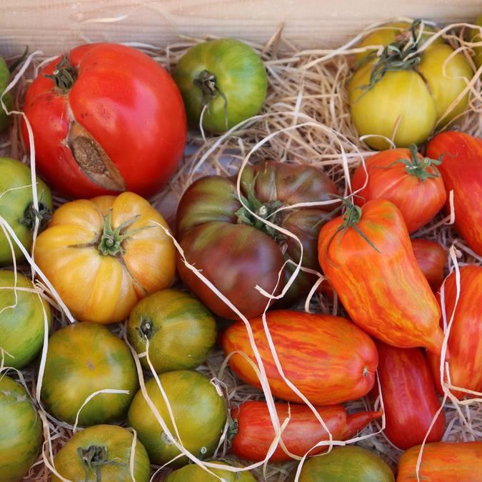Marché provençal du Luberon | Tomates | Variétés | Étal