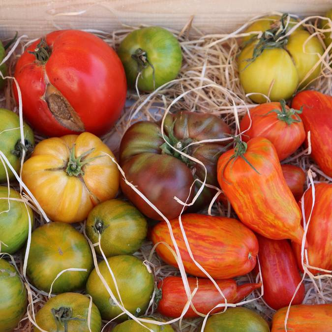 Tomates   Marché Apt  Provençal
