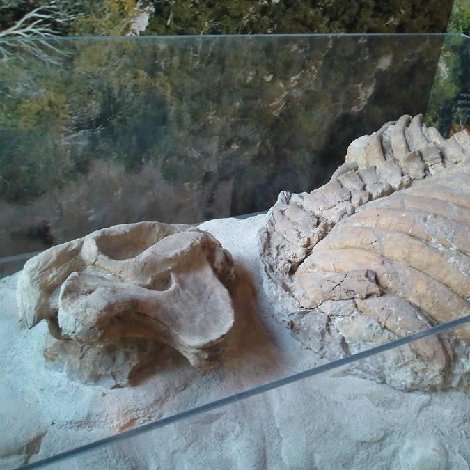 Musée de la géologie