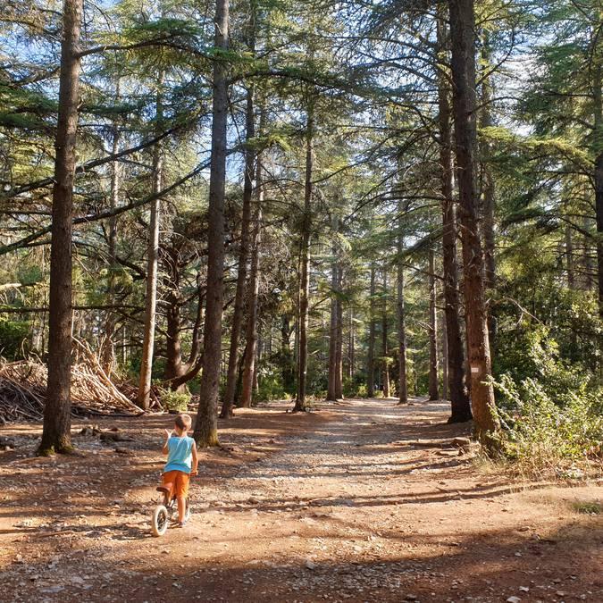 Forêt des cèdres | Randonnées à Bonnieux