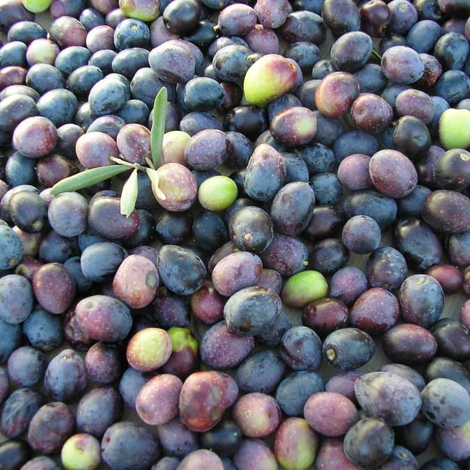 Producteurs du Luberon | Produits locaux | Vins du Luberon | Huile d'olive du Luberon | Souvenir du Luberon | Fruit confit d'Apt | Domaine viticole | Brasseur |