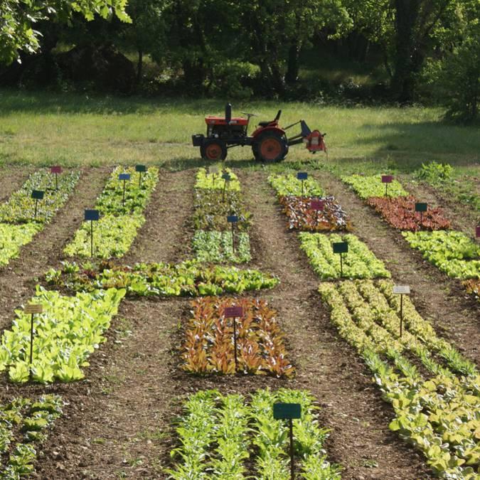 Potager d'un curieux | Plantes | Agriculture