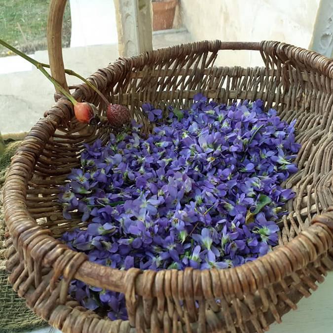 Cueillette de violettes | Fleurs | Printemps